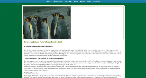 A graphic showing penguins combined with a light, informative article regarding frost free periods in Alberta